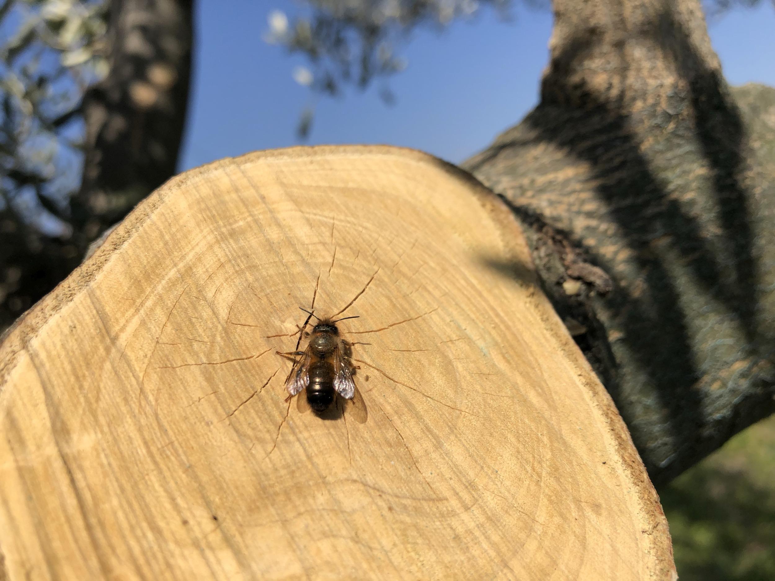 Biene macht Pause
