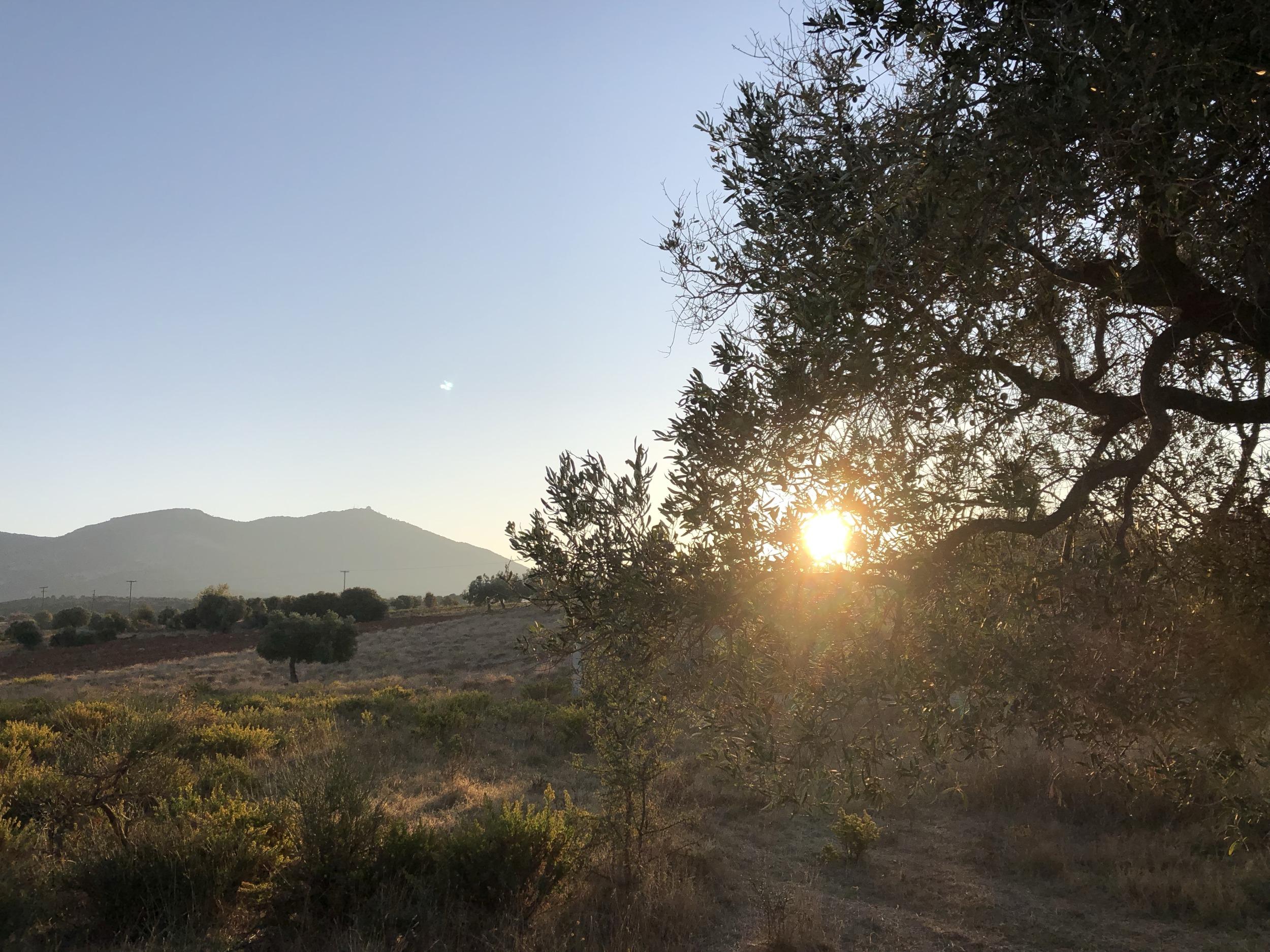Sonnenaufgang hinter Olivenbaum